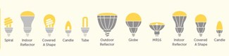 bulb guide illustration